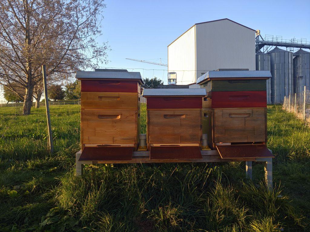 Zweiter Honigraum 2020